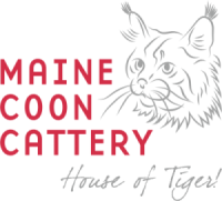 Maine Coon Cattery House Of Tiger